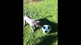Adonis Fussball spielen