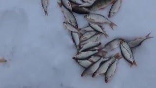 Как ловить рыбу на козу зимой видео