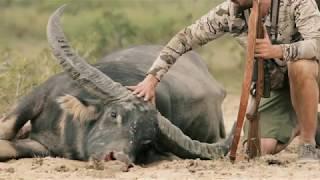 Water Buffalo Hunt - Sako Great Hunt Series with Remi Warren