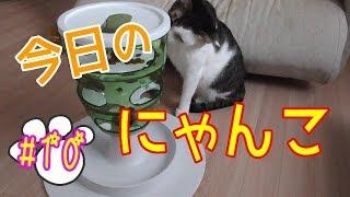 【今日のにゃんこ】頭を使って餌を狙え☆うまく餌がとれるかな?(後編)【#10】 thumbnail