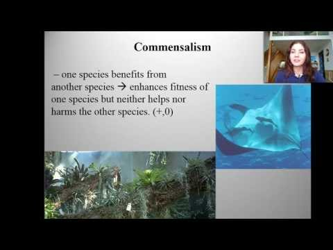 Introduction to Ecology and Symbiotic Relationships
