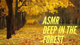 Звуки леса. ASMR Sound.The Sound of the forest. АСМР. Отдых в лесу