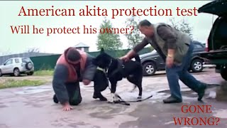 will an american akita protect his owner? TEST