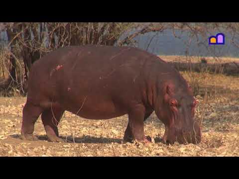 Zimbabwe - Mana Pools National Park