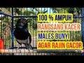 Kacer Males Bunyi  Ampuh Respon Ikut Gacor Dg Kacer Gacor Seperti Ini Tes Kacer Anda Segera  Mp3 - Mp4 Download
