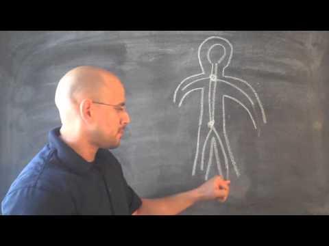 Sintomas de Nervios Pinchados en La Espalda y Cuello - YouTube