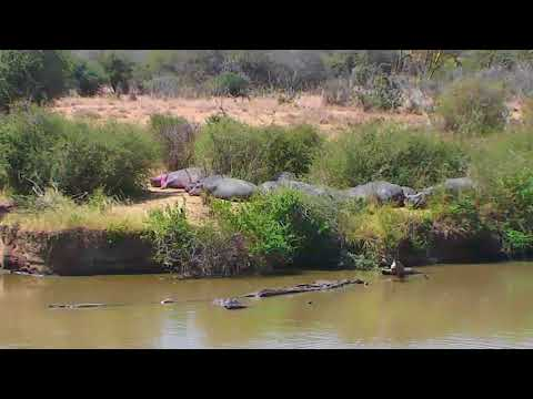 African Animals - Watering Hole Cam 01-14-2018 00:04:01 - 00:59:55
