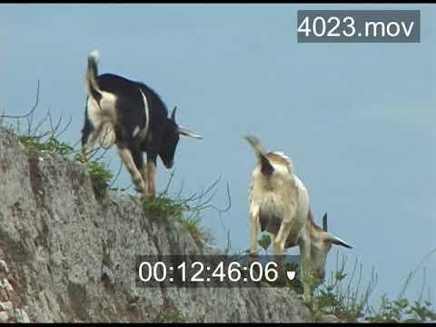 Cuba 2002 (archival footage)