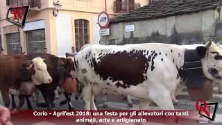 Corio - Agrifest 2018: una festa per gli allevatori con tanti animali, arte e artigianato