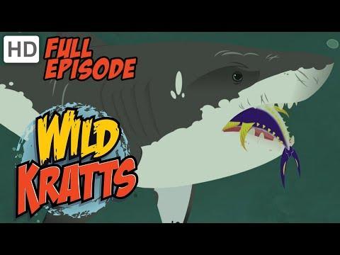 Wild Kratts - Stuck on Sharks (HD - Full Episode)