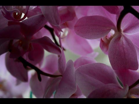 Правильный уход за орхидеями после цветения