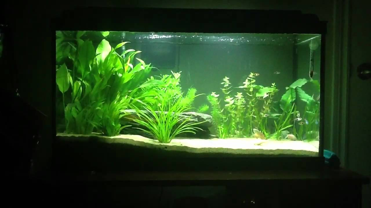 how to keep fish tank clean for long time