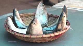 "Amazing Hilsa Fish Fry ""Fish Fry Recipe"" - Simple Crafts Recipes"