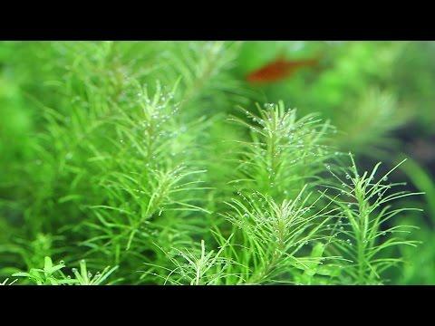 #25.癒し動画 scene2~眠くなるようなゆったりした水槽の世界へ~ (Aquarium