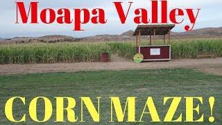 Moapa Valley Corn Maze 2018! (las Vegas Vlog)