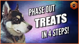 How to Phase Out Treats and Fade Lures  Get Your Dog to Listen