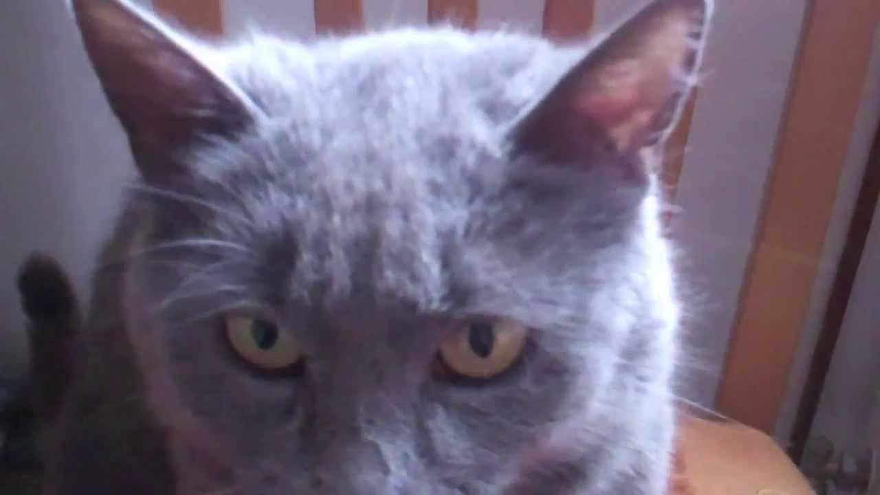 Cat purrs loud