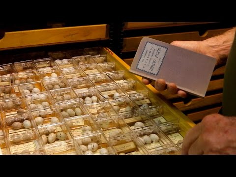 Illinois State Museum: Bird Egg Collection