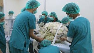 Врачи помогли черепахе, проглотившей 915 монет (новости)