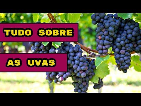 Uvas Diferentes Vinhos Diferentes Confira