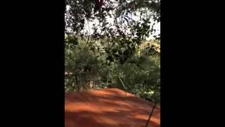 Barn Owl Nest Box Installation In Tree - Part 2 Of 2
