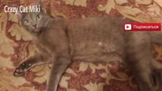 Злая кошка .кошка кусает руки. EVIL CAT