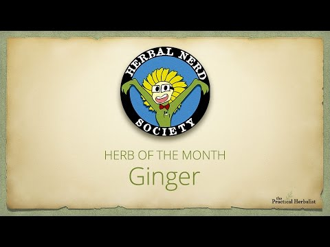 Herbal Nerd Society - Herb of the Month: Ginger