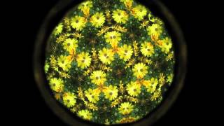 This is a really cool video of a pot of plants viewed through a kal...