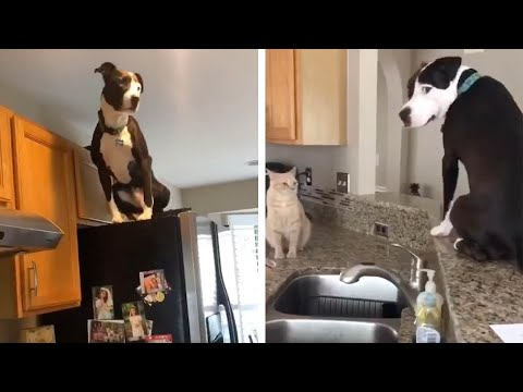 Dog Thinks He's Actually A Cat