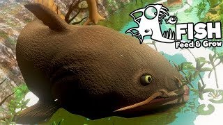 Feed and Grow Fish Gameplay German - Level 1000 Catfish End Game