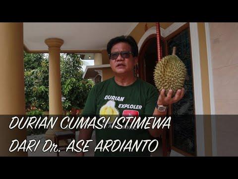 DURIAN CUMASI ISTIMEWA DARI Dr. ASE ARDIANTO
