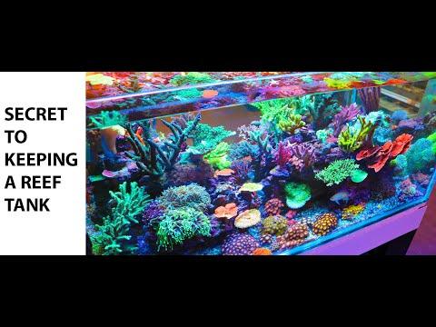 The Secret to Keeping a Salt Water Reef Tank