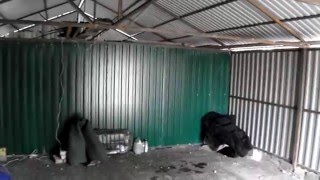 видео Как построить гараж из профнастила своими руками