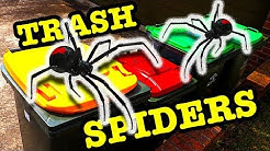 Redback Spider Removal 4 Trash Bins Oops One Got Away EDUCATIONAL VIDEO