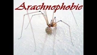 ANGST vor SPINNEN - Arachnophobie - Phobiekon #1