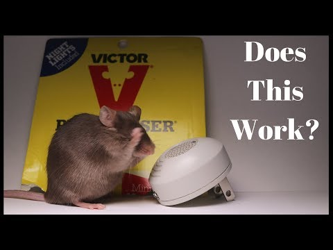 Testing Out the Victor PESTCHASER Ultrasonic Rodent Repeller. Does It Work?