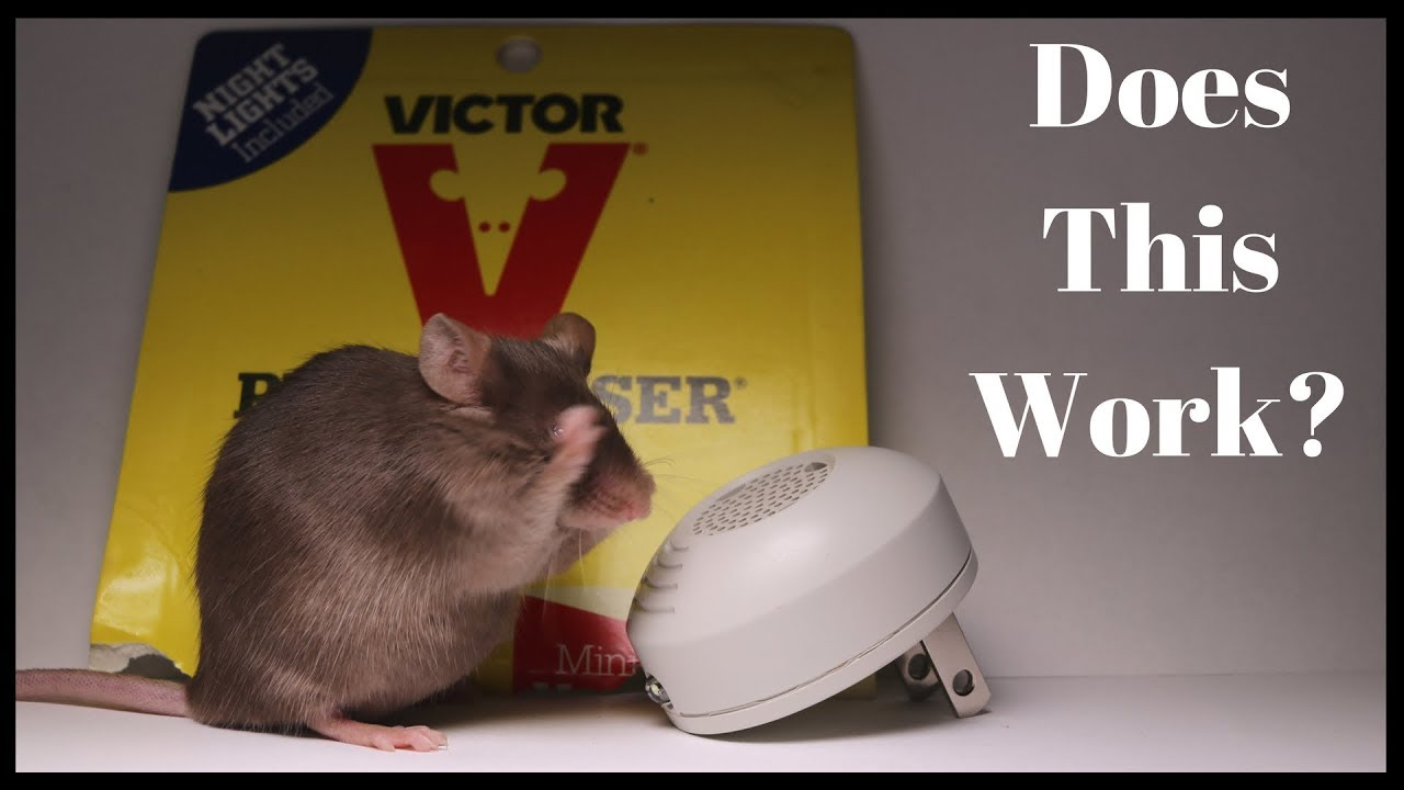Testing Out the Victor PESTCHASER Ultrasonic Rodent Repeller  Does It Work?