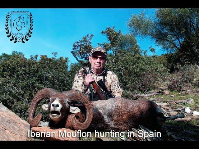 #Mouflon hunting in Spain Europe  by www.lynx.tours