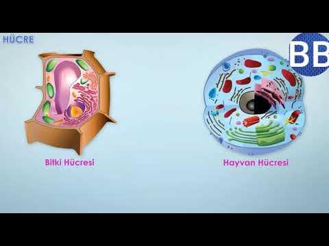 7. Sınıf HÜCRE ve BÖLÜNMELER (Bitki ve hayvan hücresi)