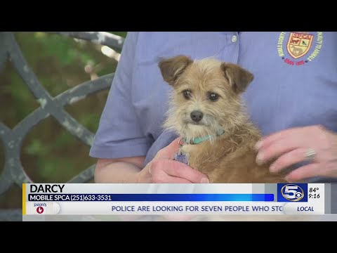 Pet of the Week: Small scruffy-face terrier is perfect snuggler
