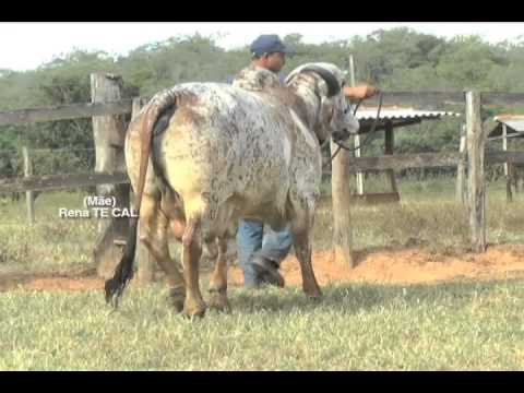 Lote 02   Parg 164