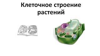 1. Клеточное строение растений (6 класс) - биология, подготовка к ЕГЭ и ОГЭ 2019