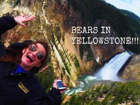 WE SAW A BEAR ~ Cross-Country Road Trip pt.3 ~ Yellowstone