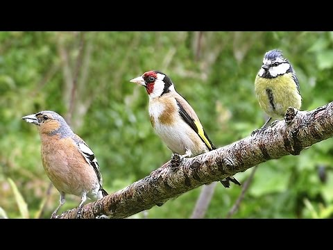 Birds Flying in Slow Motion with Beautiful Bird Sounds  : Volume 6