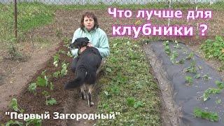 Три способа осенней посадки клубники  Три вида мульчирования агроволокно, скошенная трава и перепрев