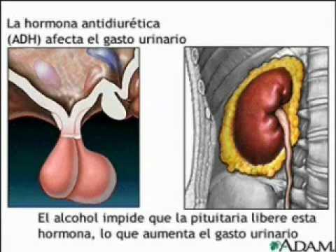 tipos de enfermedades endocrinas