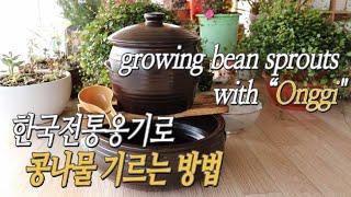 전통옹기롱 콩나물 기르기 growing bean spr…