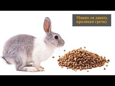 Вопрос: Можно ли кроликам давать брокколи?