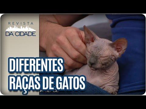 Diferentes Raças de Gatos  - Revista da Cidade (24/01/17)