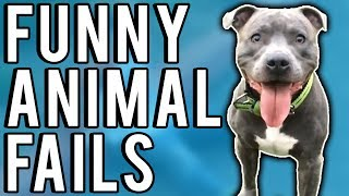 Funny Animal Fails May 2017 | A Fail Compilation by FailUnited